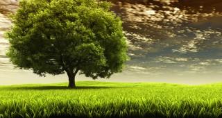 arbre ciel sombre