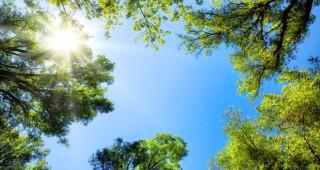 arbre soleil